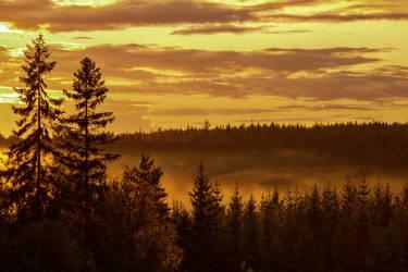 Golden forest by henkeliduu