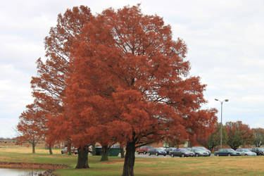 Red treeeeees by BigLTbaby