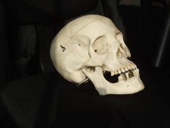 Human Skull 02 by qxvw198