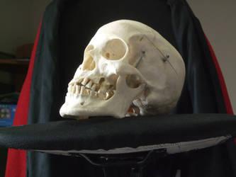 Human Skull 07 by qxvw198