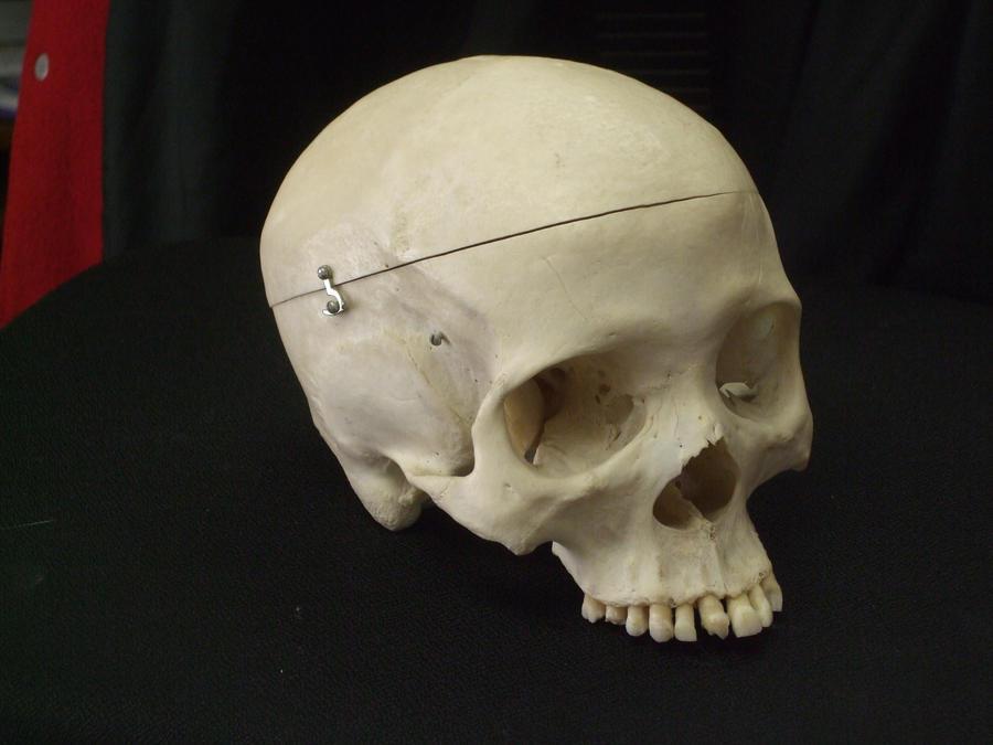 Human Skull 10 by qxvw198