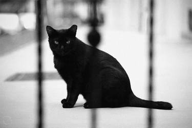 Black Cat by antontang