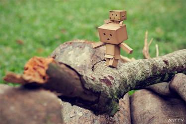 Cross The Log by antontang