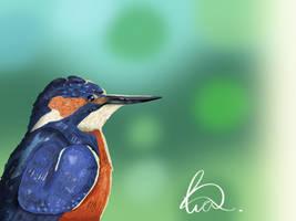 Kingfisher II by TheLimeKiwi