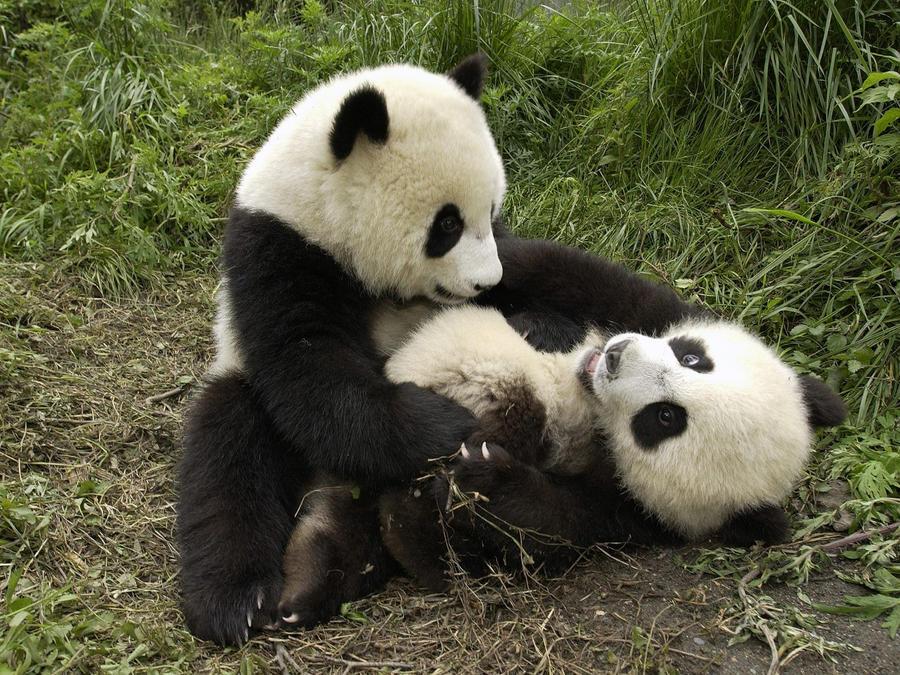 panda 2 by Sophie-Y