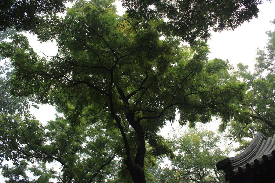 tree by Sophie-Y