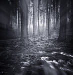 Dusk Forest By Ipwnpt On Deviantart