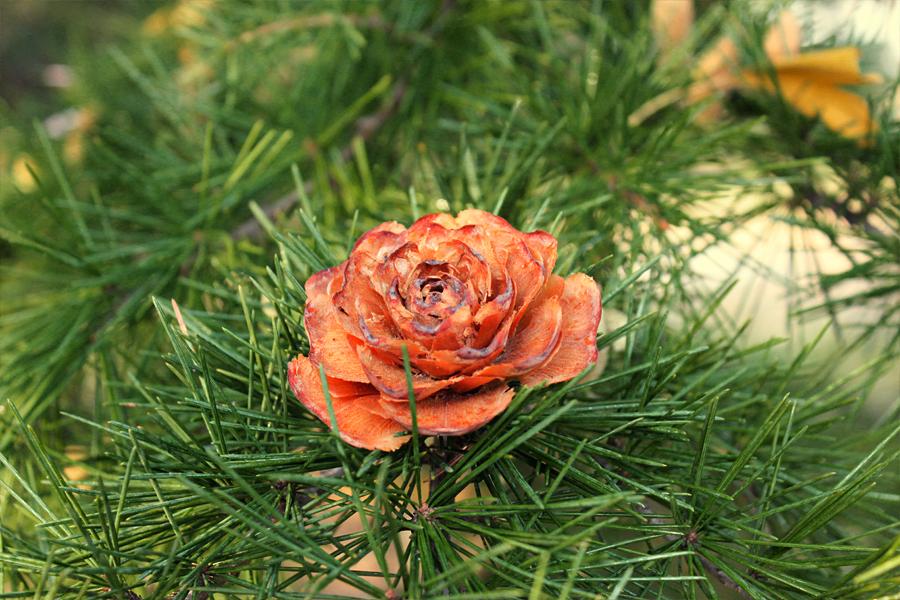 Pine flowers by Sophie-Y