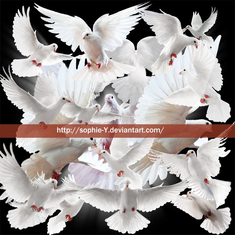 Pigeon by Sophie-Y