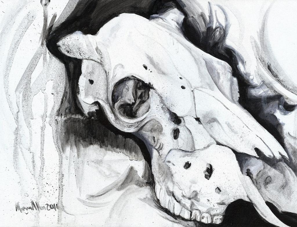 cow skull still life study by caroro on deviantart