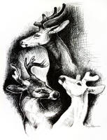 deer sketches by caroro