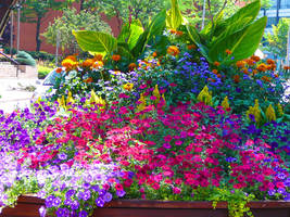 The Colors Of Summer by Akeen7000