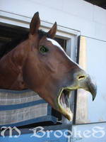 Beaked Horse by she1badelf