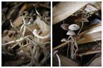 Fungi by FuchsiaG