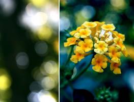 Shimmering Into Focus by EchoRukia