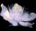 fleur jaune by EchoRukia