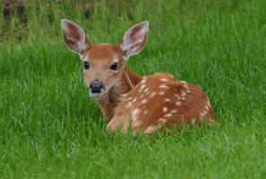 oh deer.. by ryokogirl