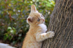 kitten 2 by SkyDarko