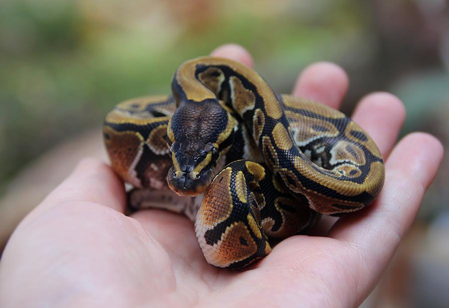 True python by SkyDarko