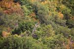 dead trees do not surrender! by SkyDarko
