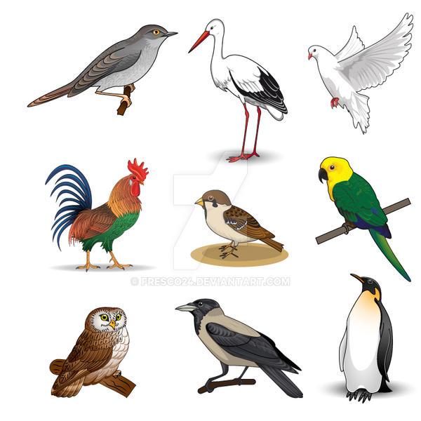 Birds by Fresco24