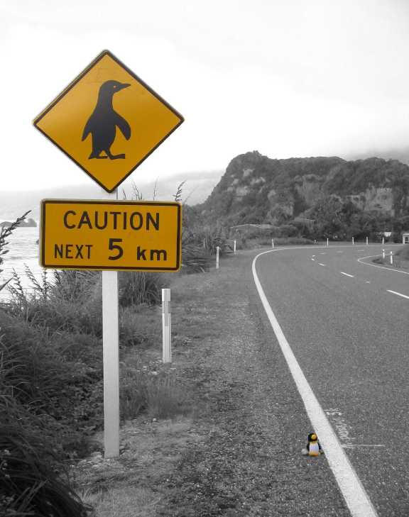 Penguin crossing the road by penguin86