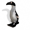 Spore creature - Great Auk (on land) PNG by Tote-Meistarinn