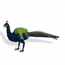 Spore creature - Indian Peafowl (male 1) PNG