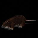 Spore creature - Bulldog rat PNG by Tote-Meistarinn