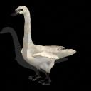 Spore creature - Trumpeter swan PNG by Tote-Meistarinn