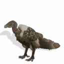 Spore creature - Ruppell's Vulture PNG by Tote-Meistarinn