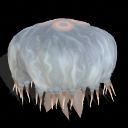 Spore creature _ Aurelia jellyfish PNG by Tote-Meistarinn
