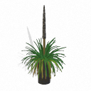 Spore Building - Xanthorrhoea semiplana 1 PNG by Tote-Meistarinn