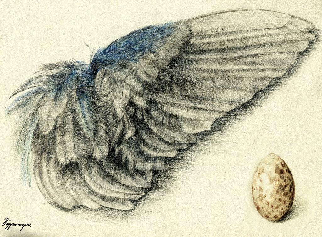Purple Gallinule Wing and Egg