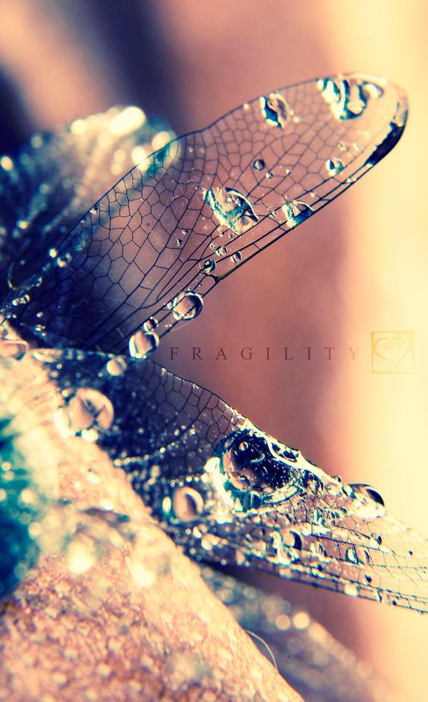 Fragility II by HeartDriven