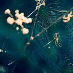 Spider III