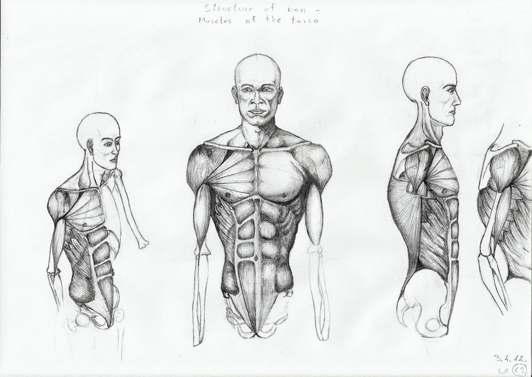 Human torso by dVicko