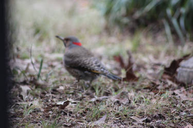 NATATURE Bird 14 by jimmylee1562