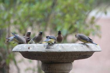 NATURE Bird 7 by jimmylee1562