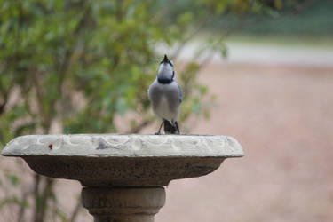 NATURE Bird 5 by jimmylee1562