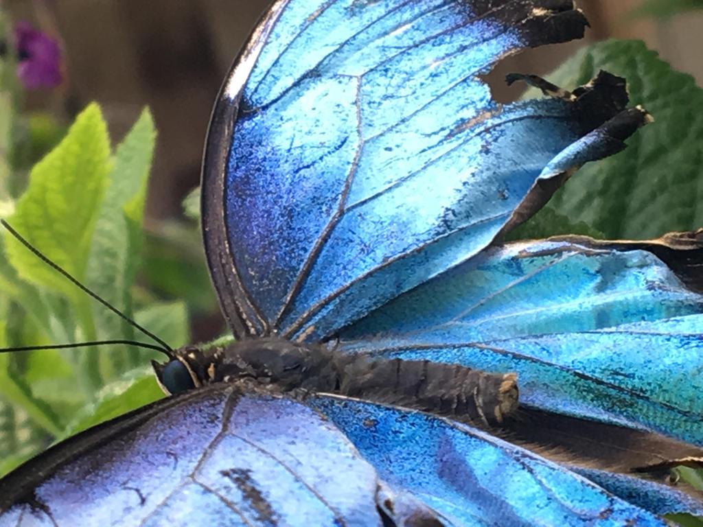 Blue by desertlilly