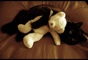 Salem and Harry.