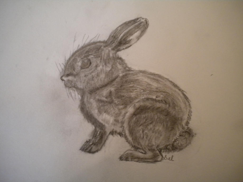 Baby bunny drawing by writerwithoutapencil on DeviantArt