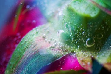 Taste of colors III by KeinDrama