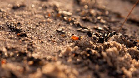 Amber spark by BzykXXL