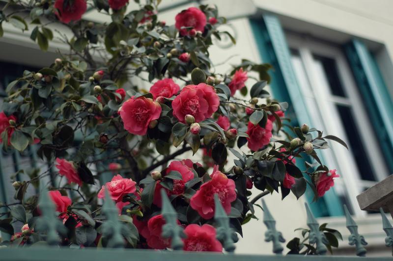Spring Awakening by SoChic28