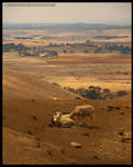 Drought by SawnOffShogun