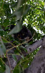 Trixi In The Tree