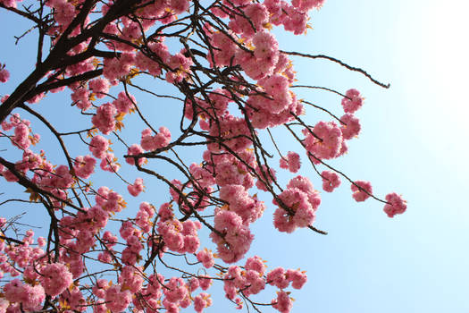 Blossoms on the Blue