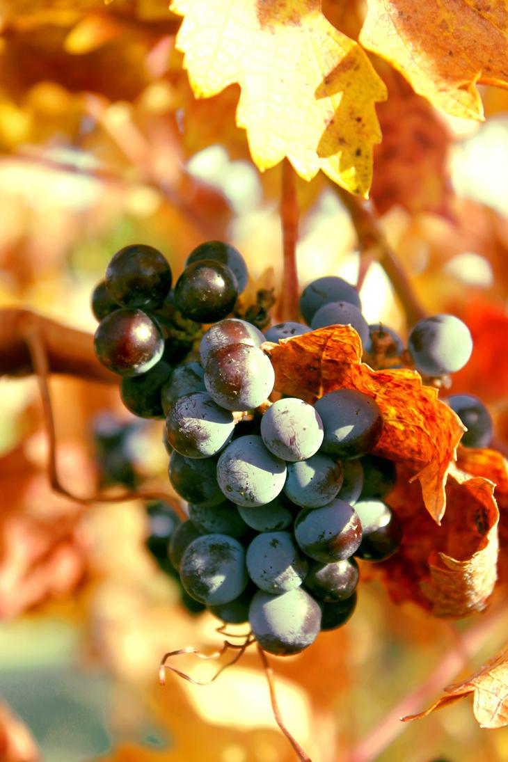 Wine Tasting by Suzums707